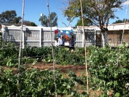 OAS garden