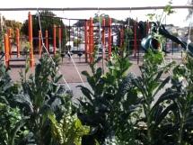 SFUSD garden